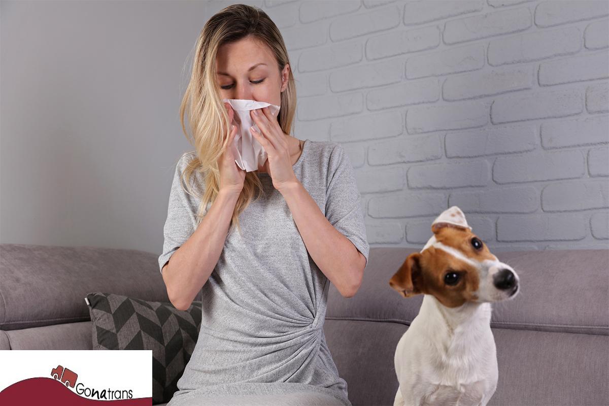 Consejos para combatir las alergias en casa
